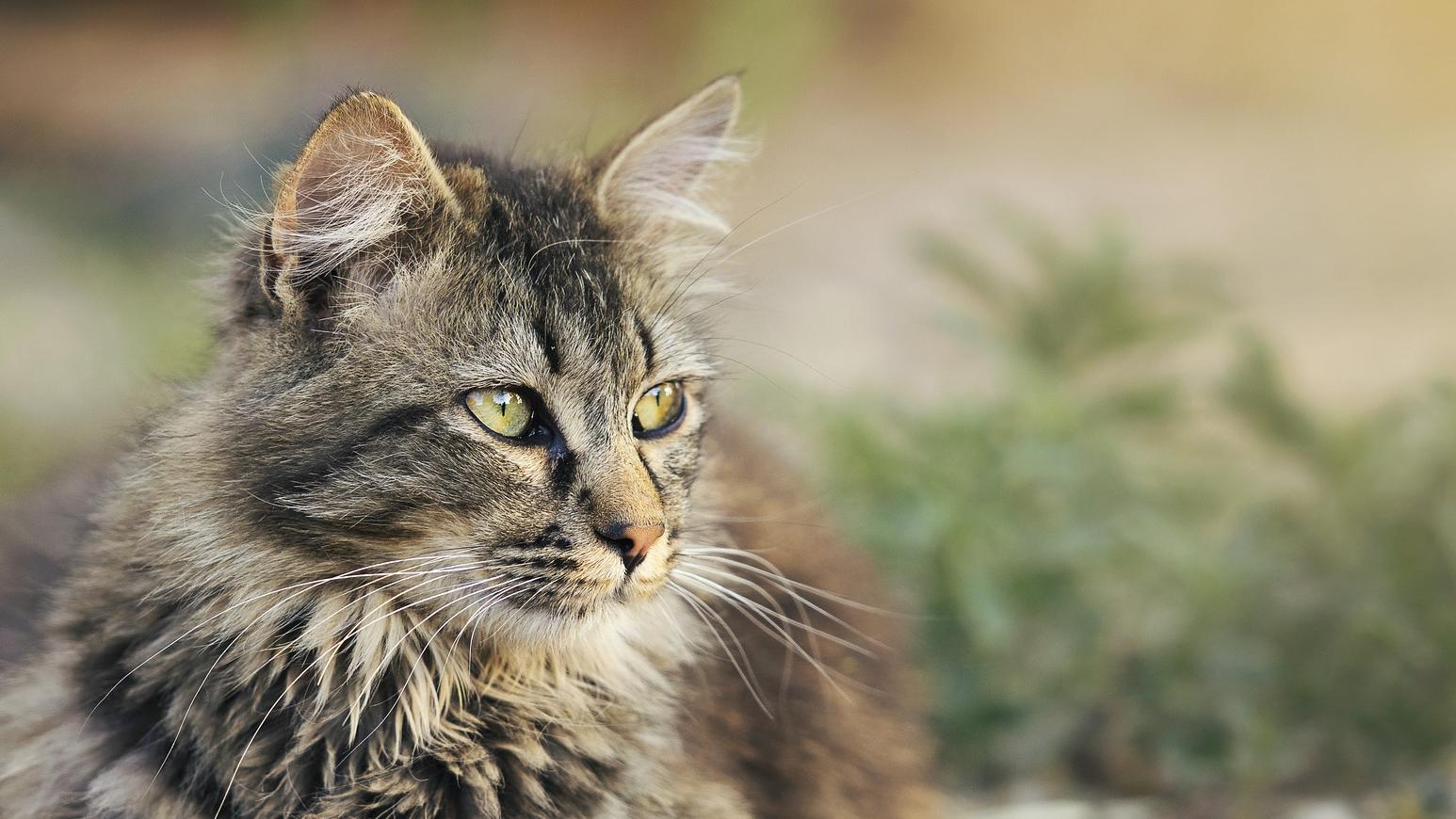 Katze Portraitaufnahme