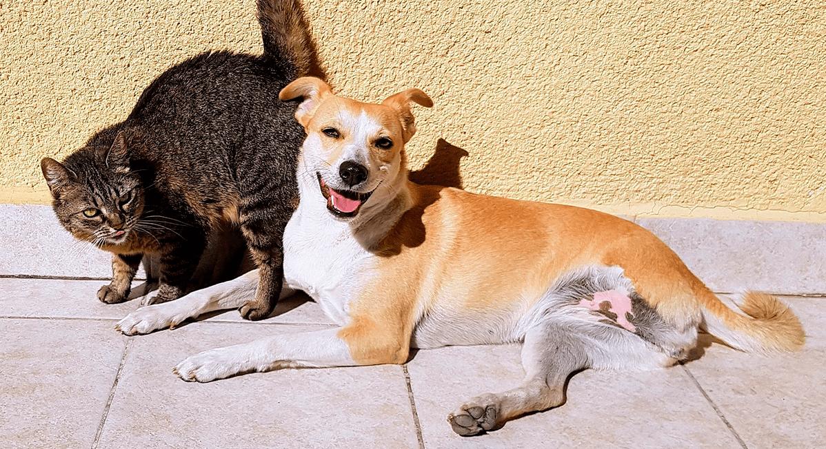 Dreibeiniger Hund mit Katze